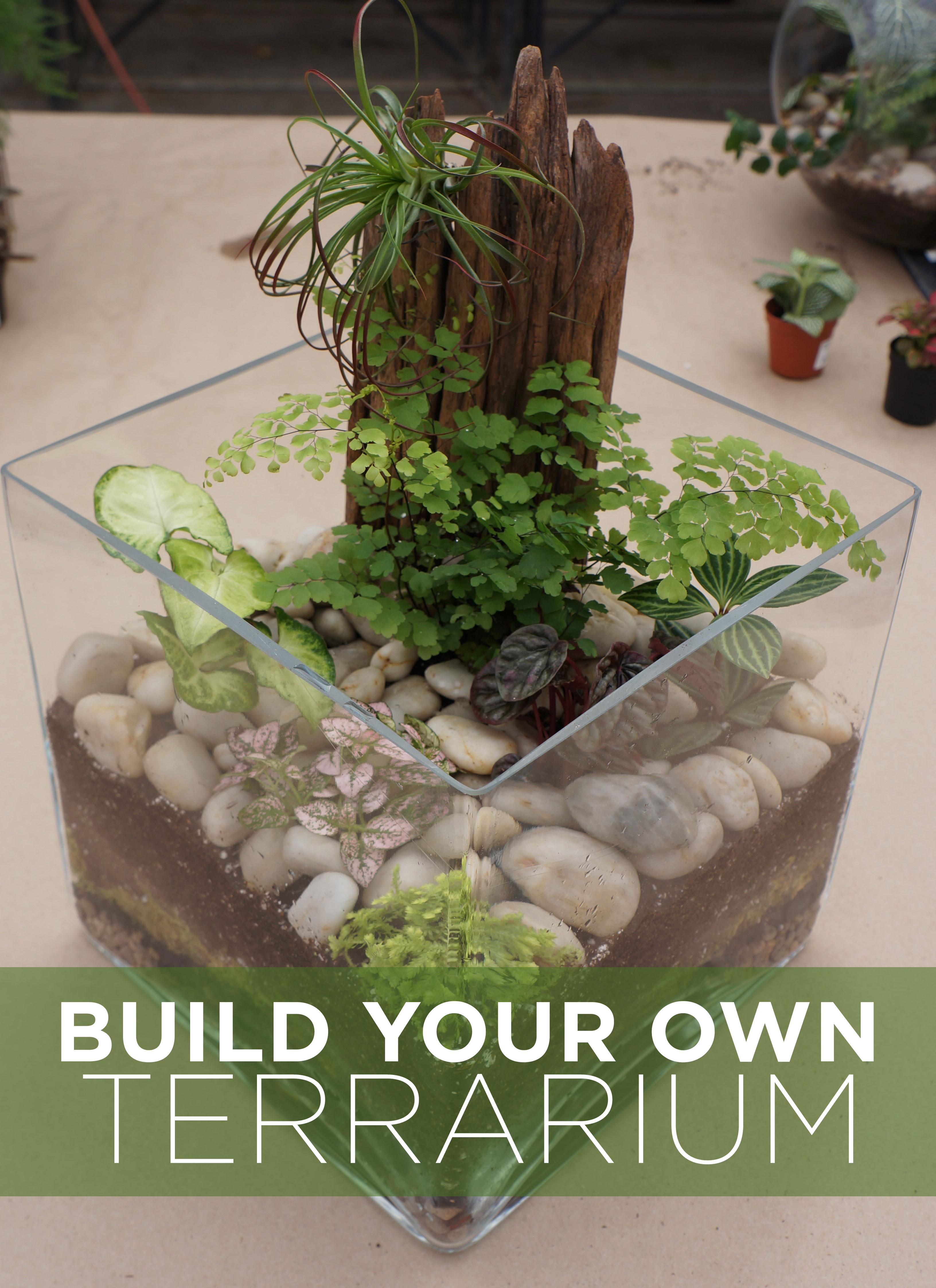 Build your own terrarium tutorial westwood gardens blog for Create your garden