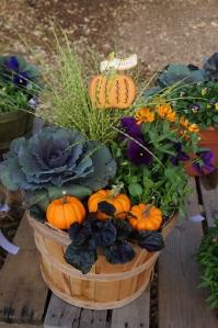 fall patio pot with mini pumpkins