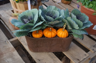 fall cabbage decorative container