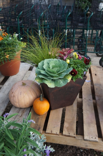 Fall patio pot with pumpkin accents