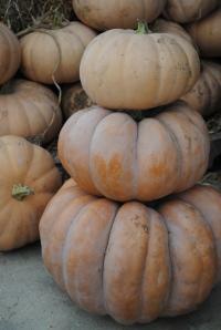 Simple Pumpkin Stack