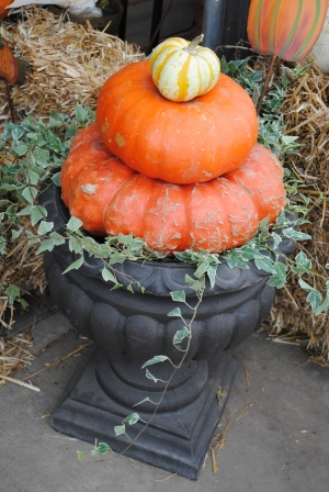 Pumpkins Stacked in Urn