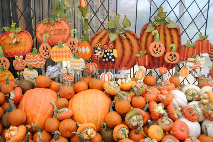 Pumpkins at Westwood Gardens