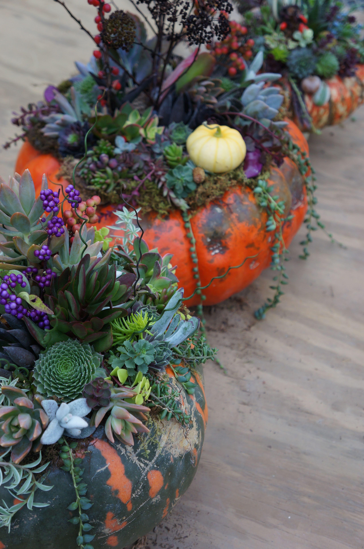 How To Build A Succulent Pumpkin Arrangement Westwood Gardens Blog