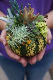 mini pumpkin with succulents