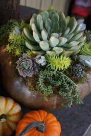 succulent pumpkin arrangement