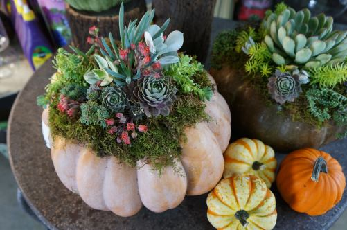 tabletop pumpkin decor