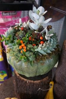 unique pumpkin with succulents