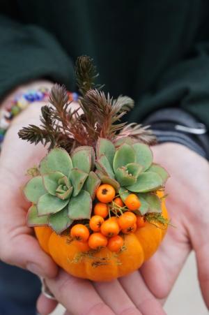 Mini Pumpkin Succulent Arrangement