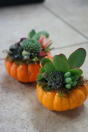 Mini Pumpkins with Succulents