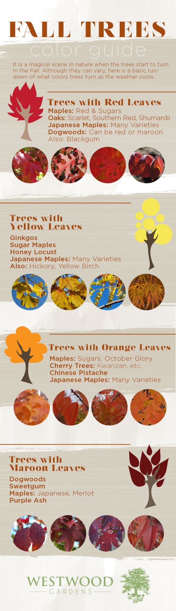 Fall-Tree-Color-Guide