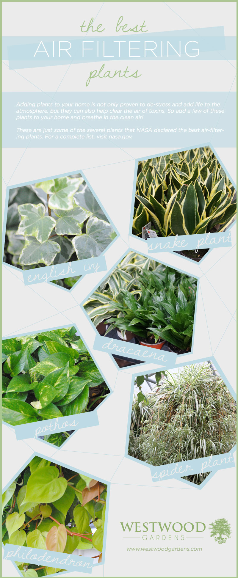 Tropical plants westwood gardens blog for Air filtering plants