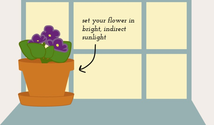 African-Violet-Infographic-2
