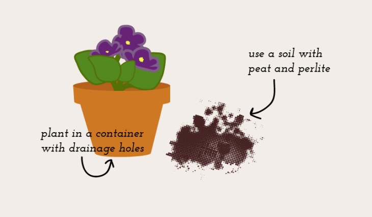 African-Violet-Infographic-3