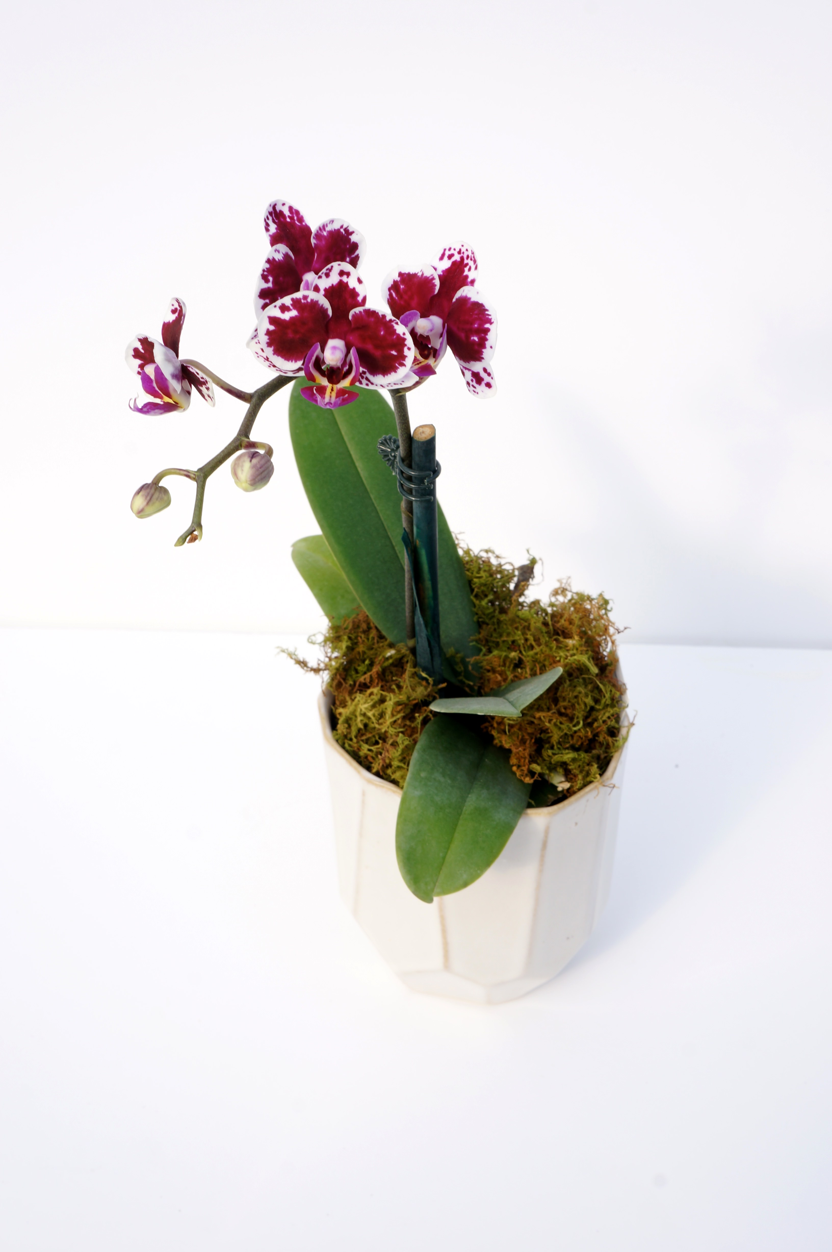 Grow Your Love with Potted Flowers for Valentine's Day ...