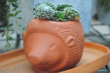 succulent in animal pot