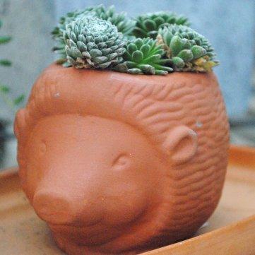 succulent in animal pot