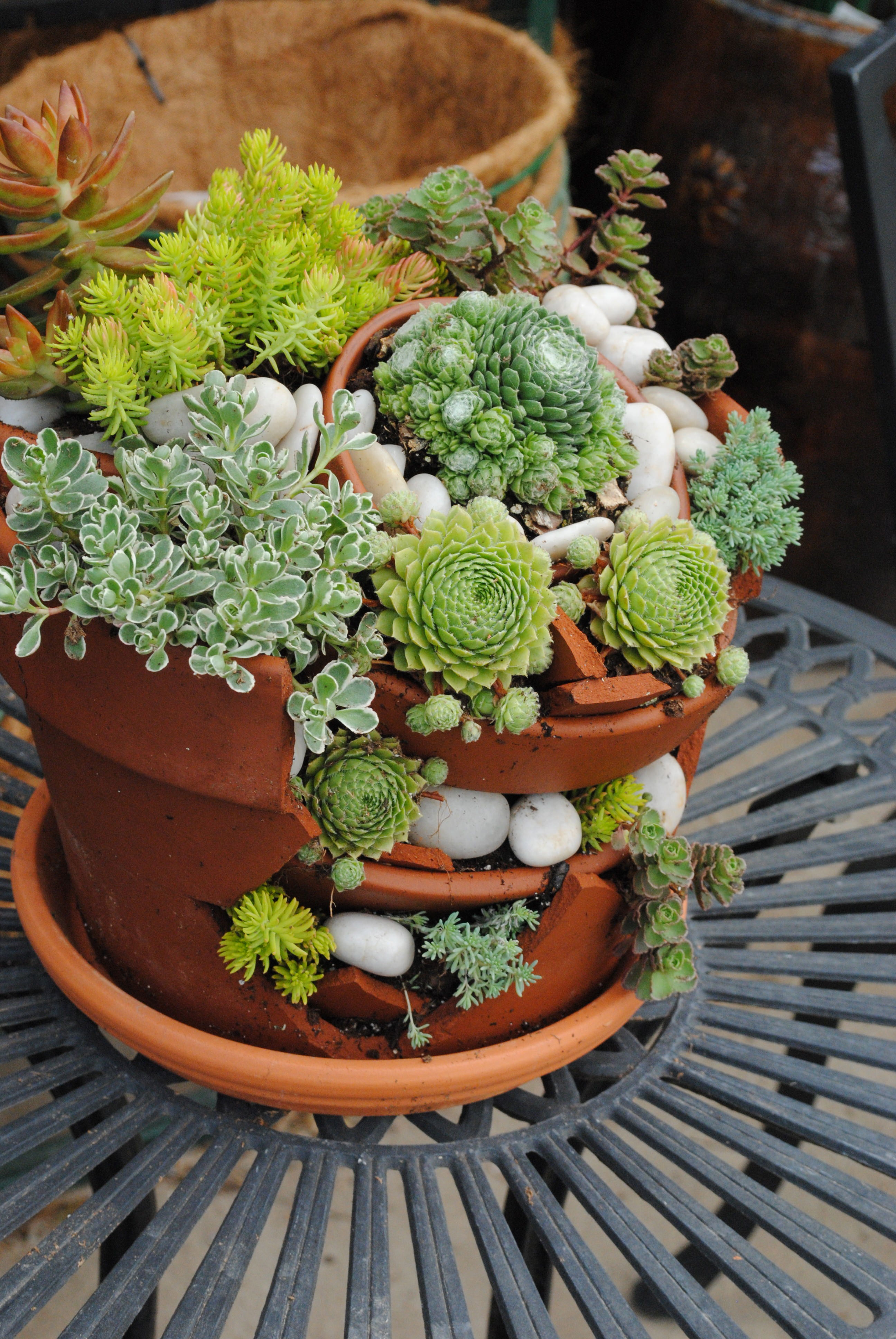Succulent Container Inspiration Ideas Westwood Gardens Blog