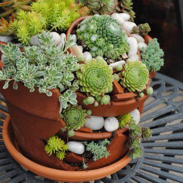 broken pot planter