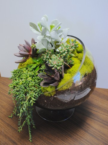 indoor succulent bowl