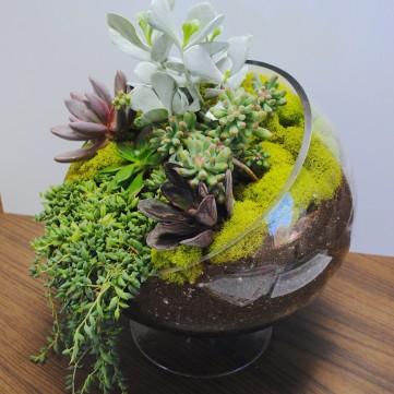 indoor succulent bowl