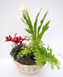 flowering tropical plant arrangement