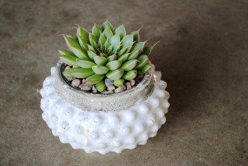 circular succulent