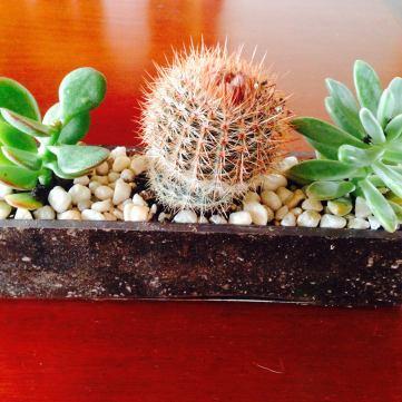 glass succulent arrangement