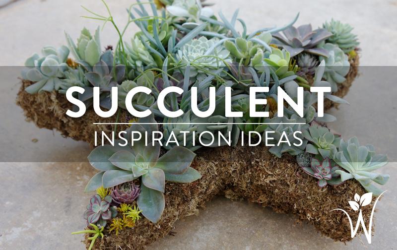 Indoor Gardening westwood gardens blog