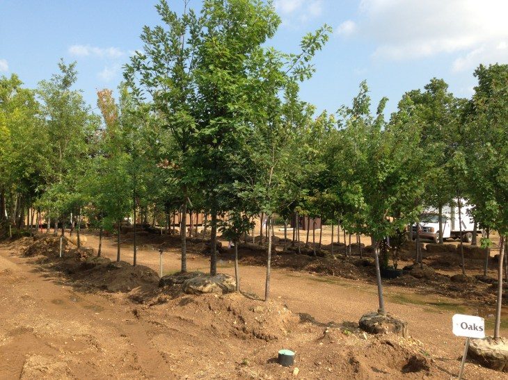 Trees and Shrub Fertilize