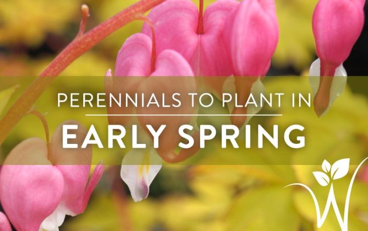 cool-season-perennials