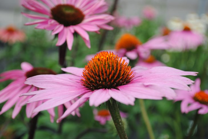 Plants To Use In Your Butterfly Garden Westwood Gardens Blog