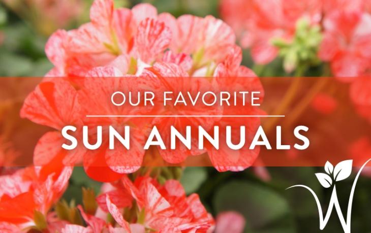 Sun-Annuals