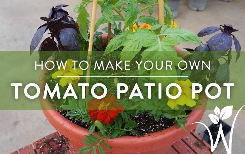 DIY Mixed Tomato Container Garden – westwood gardens blog