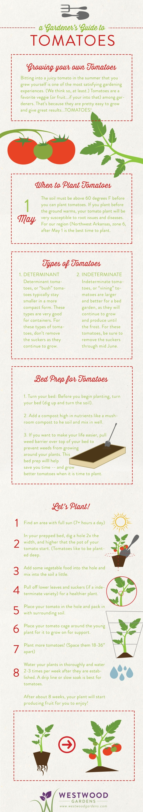 Tomatoes-Guide