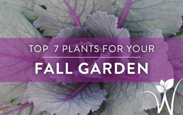 7-fall-plants