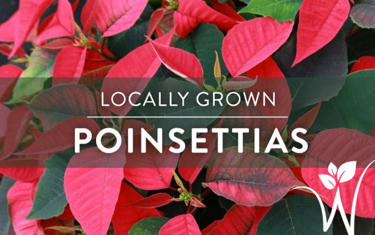 Tough Perennials