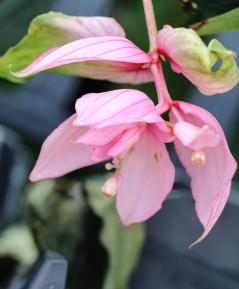 Plant in full bloom
