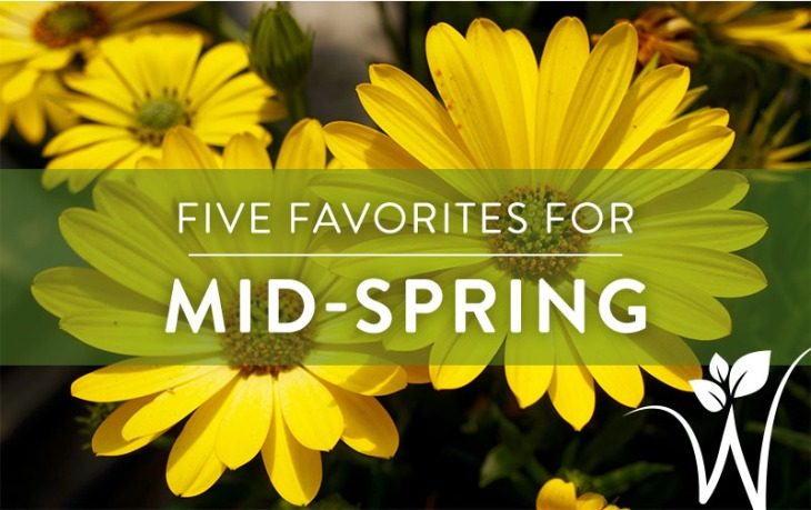 Five Favorites for Early Spring