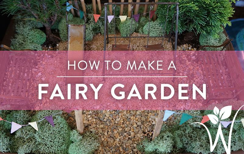 How to Build a Fairy Garden – westwood gardens blog