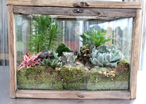 terrarium, diy, plants