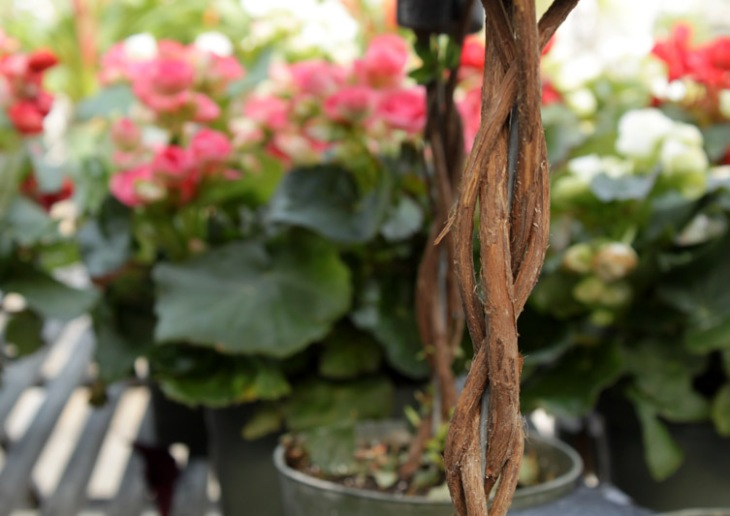 azalea topiary 2